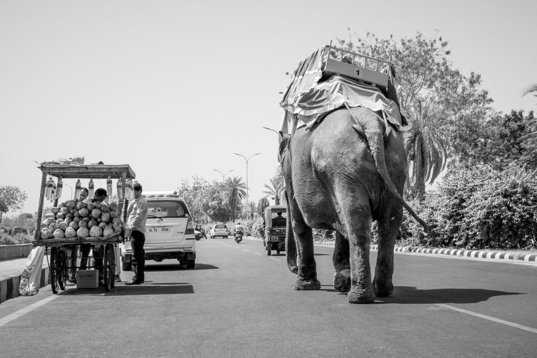India April 2016-793